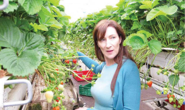 Farming Model That Has Made Ireland Most Food Secure Country photo