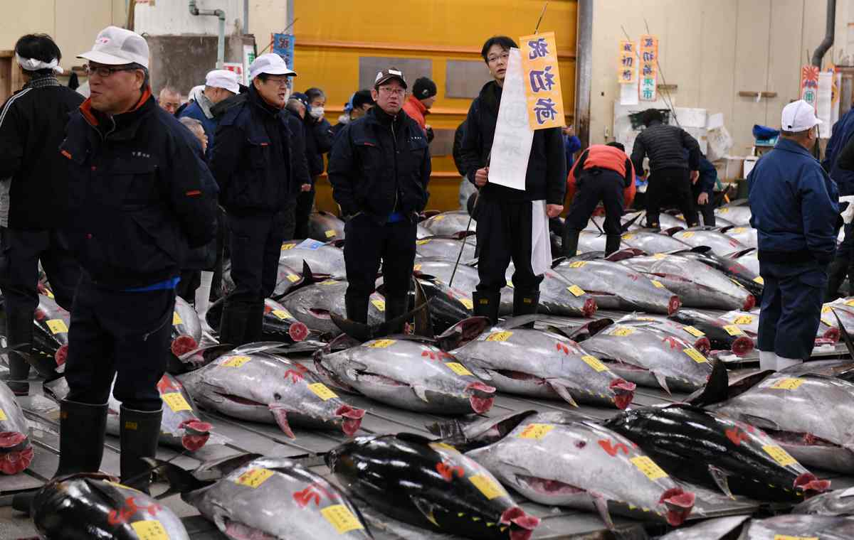 Japan's Tsukiji Fish Market To Stop Tourist Tuna Viewings As It Prepares To Relocate, photo
