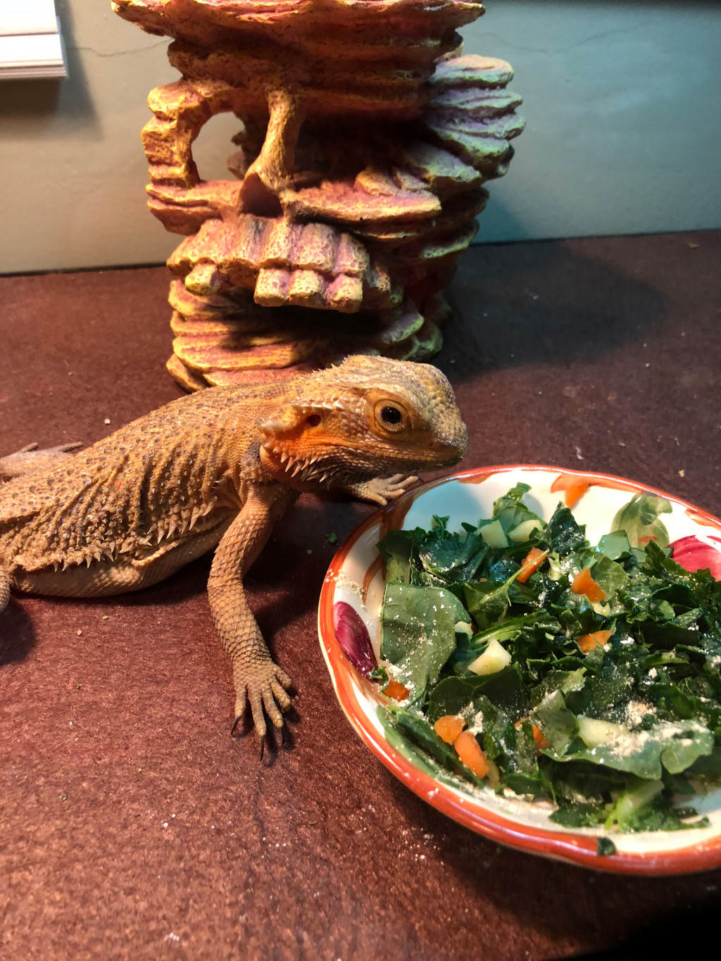 The Care And Feeding Of A Bearded Dragon ? Plus, Some Weird Looking Yellow Things photo