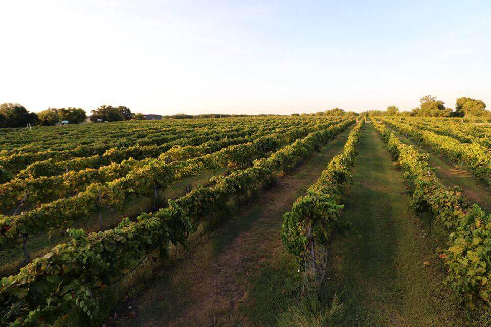 Texas Wine Podcast Episode Explores State Of The Grapes photo