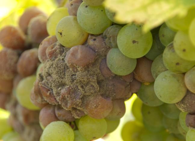Tim James: On Sweet Wine photo