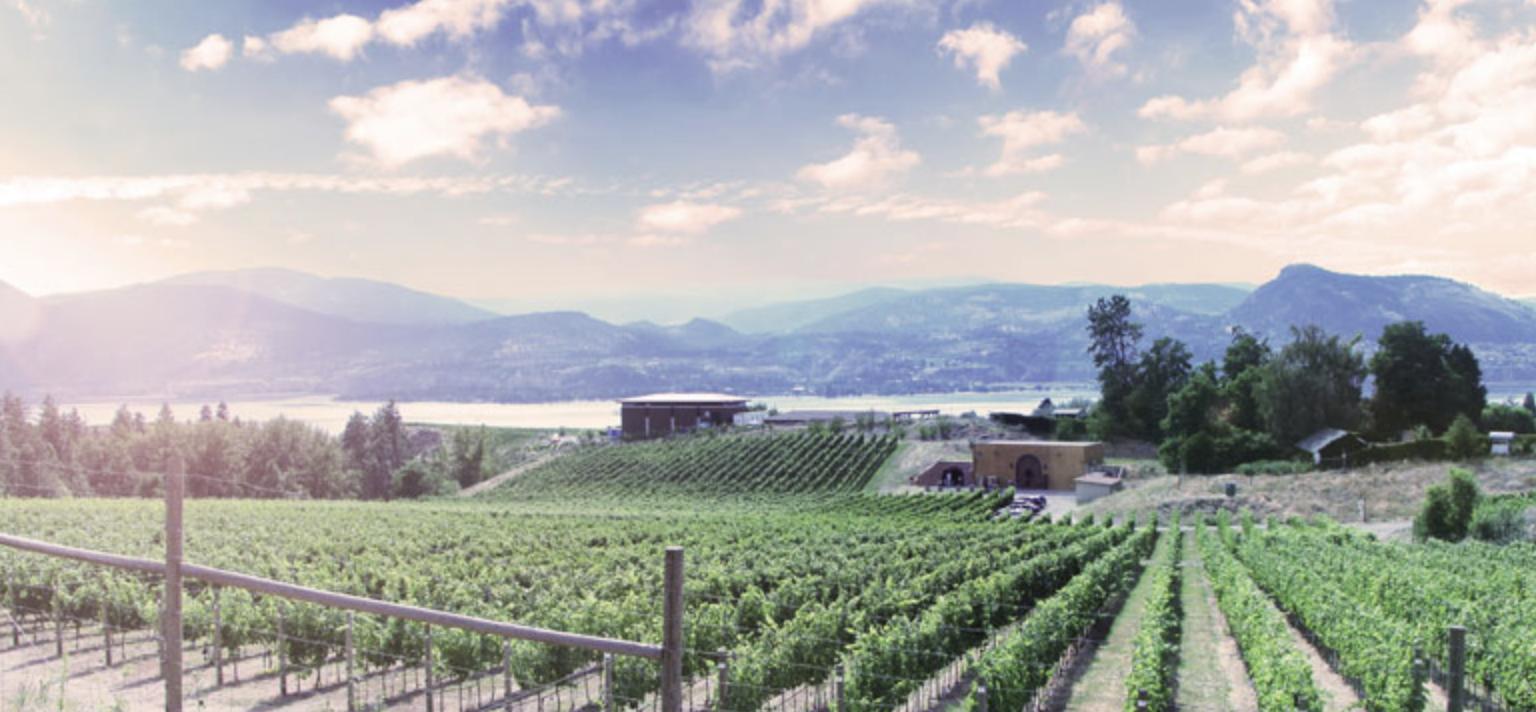 Serendipity Winery photo