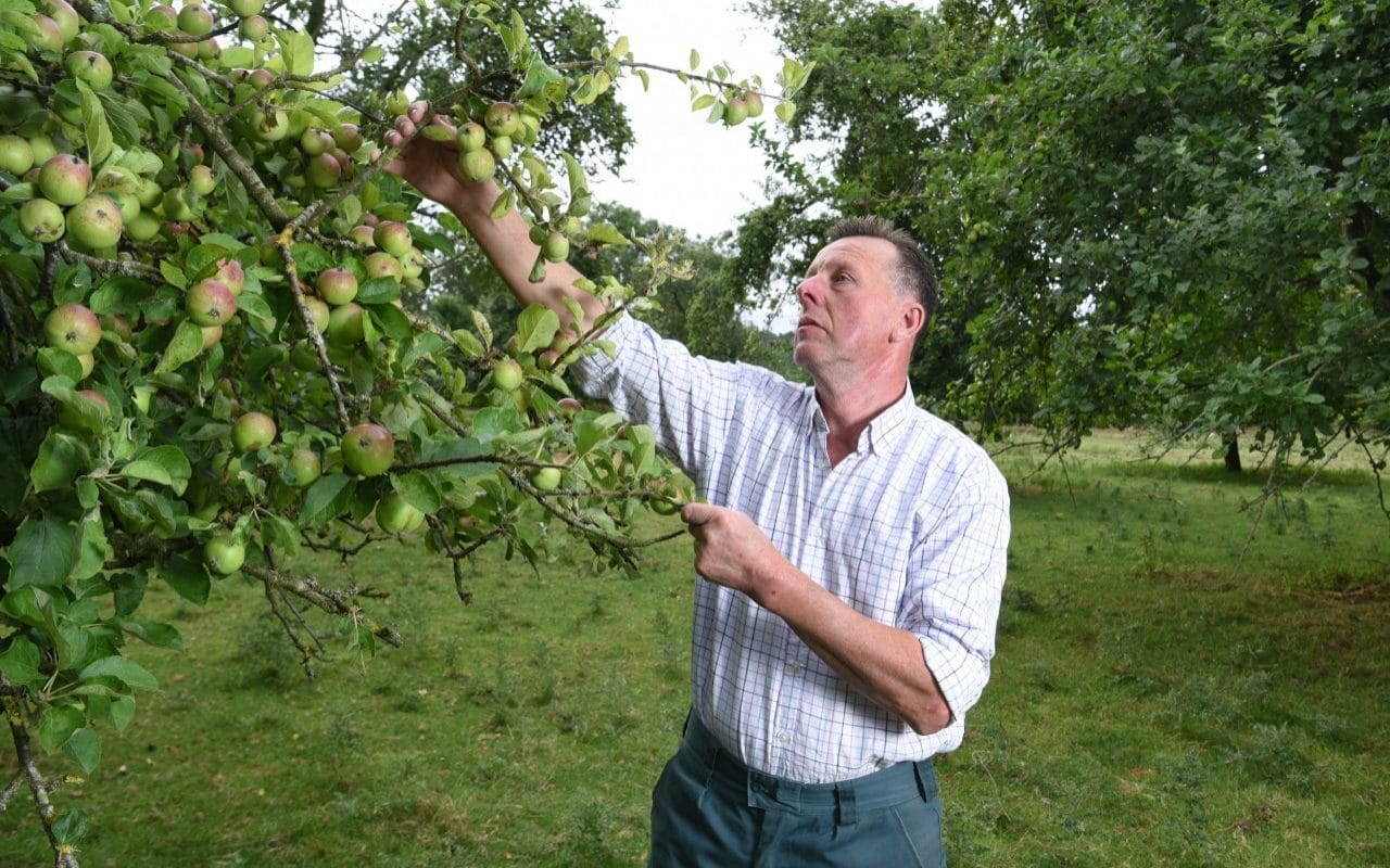 How You Like Them Apples? Growers Could Be Forced To Rip Up Their Orchards As New Flavours Don't Need Apples photo