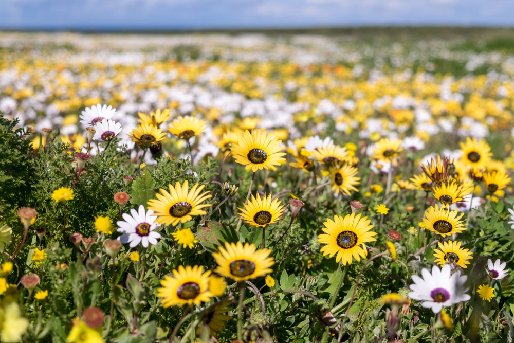 The Best Places To See The Cape Wildflowers In Bloom This Spring photo