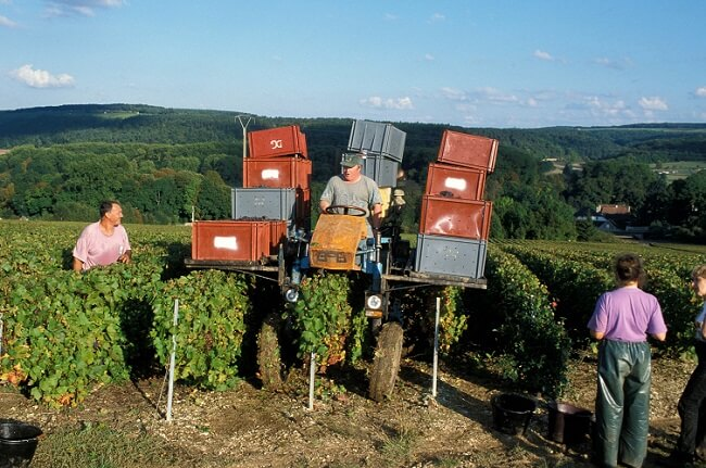 Champagne 2018 Harvest Gets Underway In Early Year photo