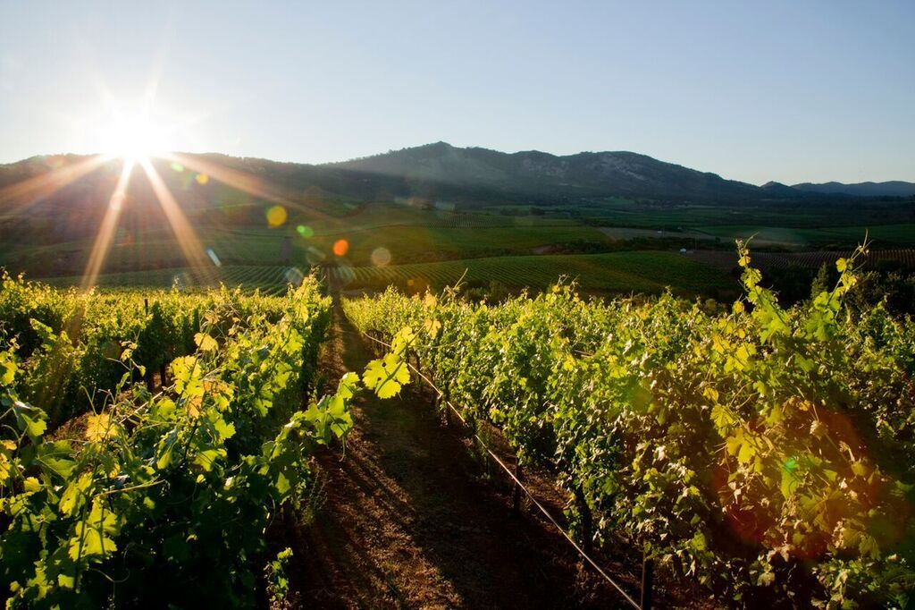 Acumen Napa Valley Has Wine That Lights Up Atlas Peak photo
