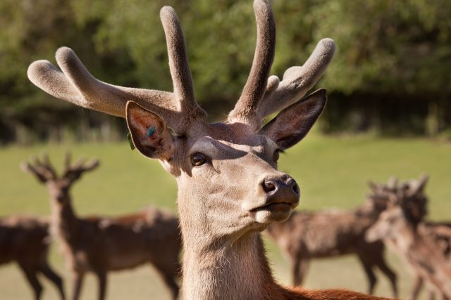New Zealand Brewery Releases ?first? Deer Beer photo