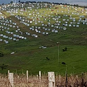 Watch: More Than 100 Structures Erected On Stellenbosh Wine Farm Owners' Land photo