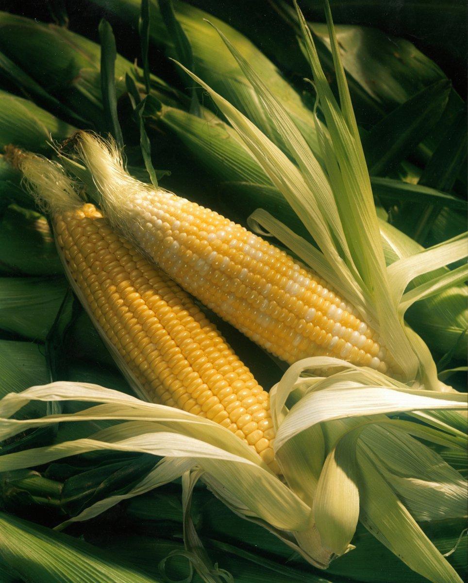 Deconstructing The Humble Cob Of Corn photo