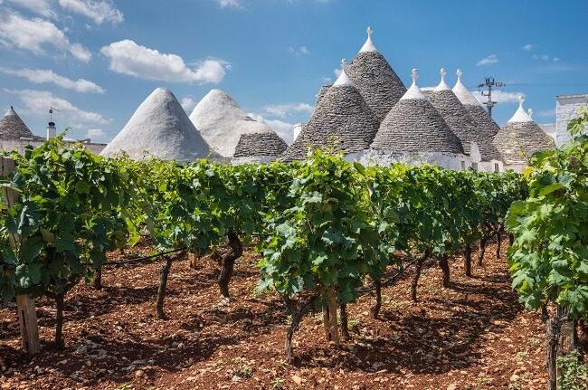 Southern Italy Wines: 10 Hidden Gems Worth Seeking Out photo