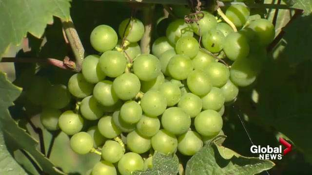 Feds And Province Offer $1m In Funding To Nova Scotia Wine Industry photo