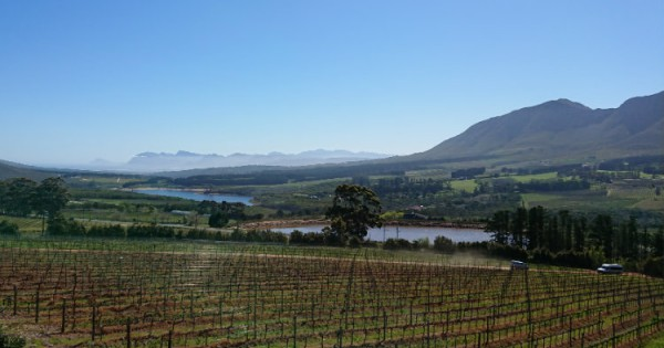 Twelve Of The Best Premium Wines From South Africa photo