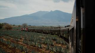Jose Cuervo Express Train Ride To Tequila: The Real Story Behind Mexico's Famous Drink photo