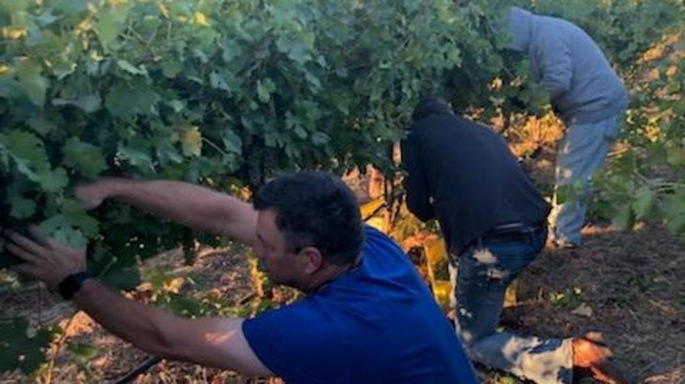 Washington Winemaker Comes To The Rescue After An Unimaginable Theft photo