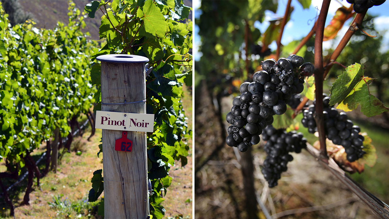 Popularity Of Oregon Wine Leading Out-of-state Wineries To Make False Associations photo