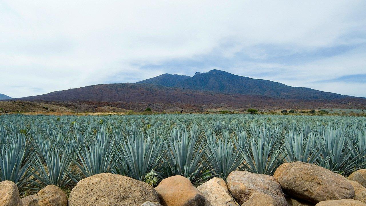La Lista Definitiva De Los Tequilas Que Mejor Representan A México photo