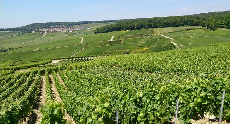 2018 An Exceptional Vintage For Champagne photo