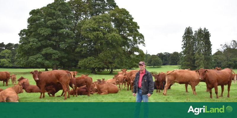 Whitfield Estate Farm Walk To Talk Through Calving-ease Breeding Programme photo