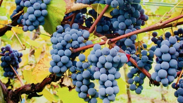 52 Wines In 52 Weeks: Fall Is Here. Break Out The Gamay photo
