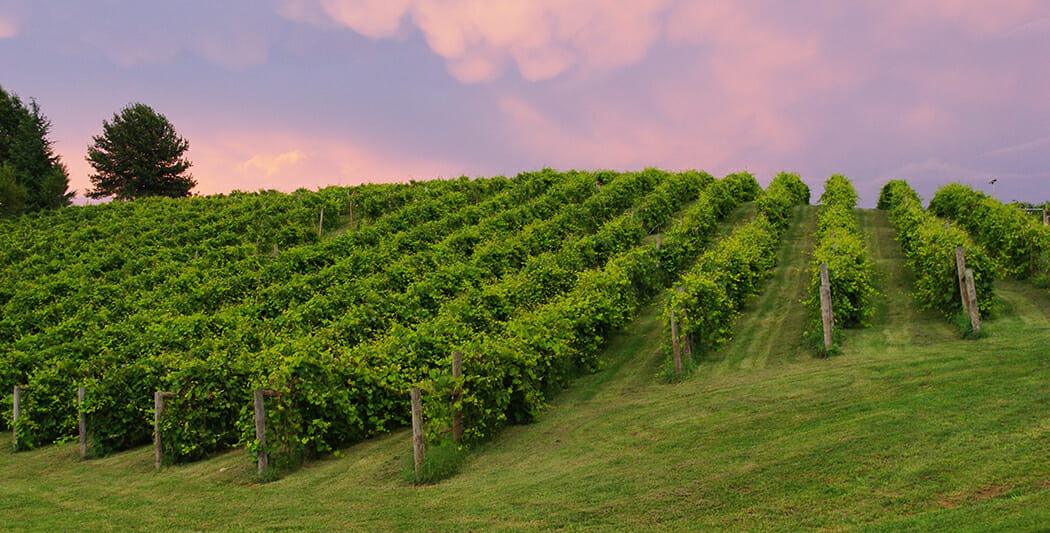 Growing Interest: Shenandoah Valley's Unique Climate Spurs Its Wine Resurgence photo