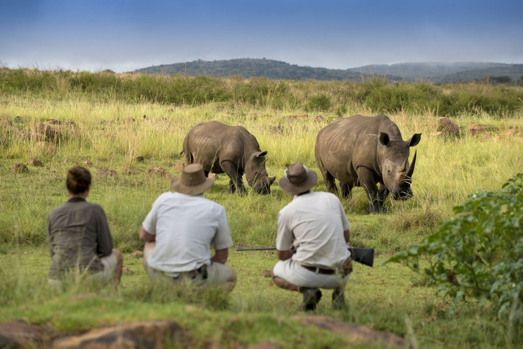 Welgevonden Game Reserve Celebrates World Rhino Day On 22 September 2018 photo