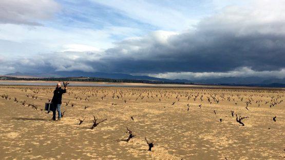 Australia?s Drought Could Produce A Corker Vintage photo