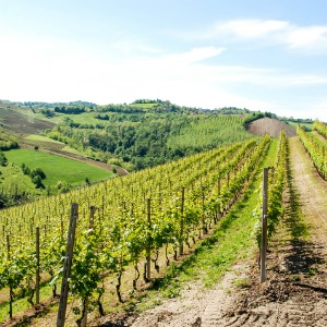 Watch: You Can't Beat Wine Tasting Through Italy With A Local Winemaker photo