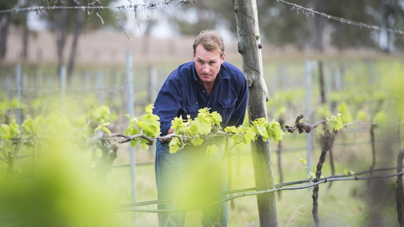 South Burnett Shines At Queensland Wine Awards photo