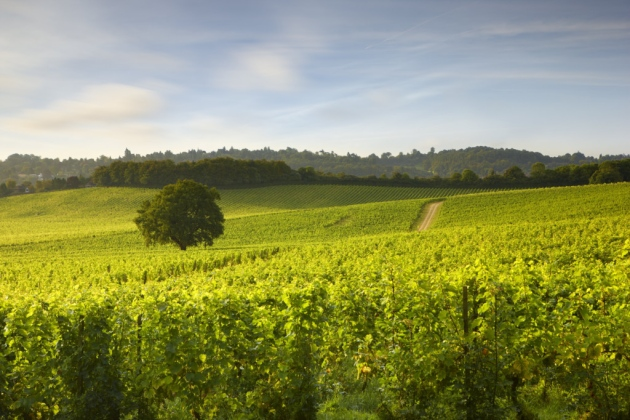 The Collective Of 5 Surrey Vineyards Putting The County On The Map photo
