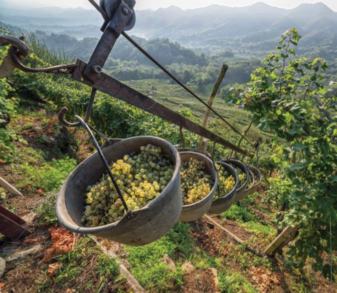 Prosecco Paradise. A Wine With A Sparkling History photo