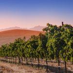 Swartland Organic Wines from Org de Rac Snatch Three Tim Atkin 90pt-plus Scores photo