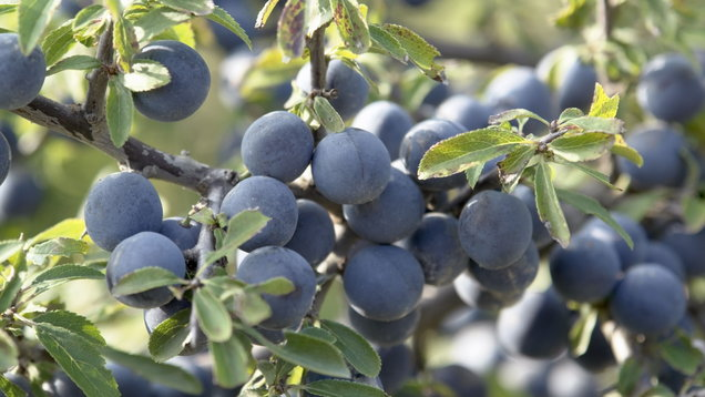 3 Of The Best Sloe Gins To Buy photo