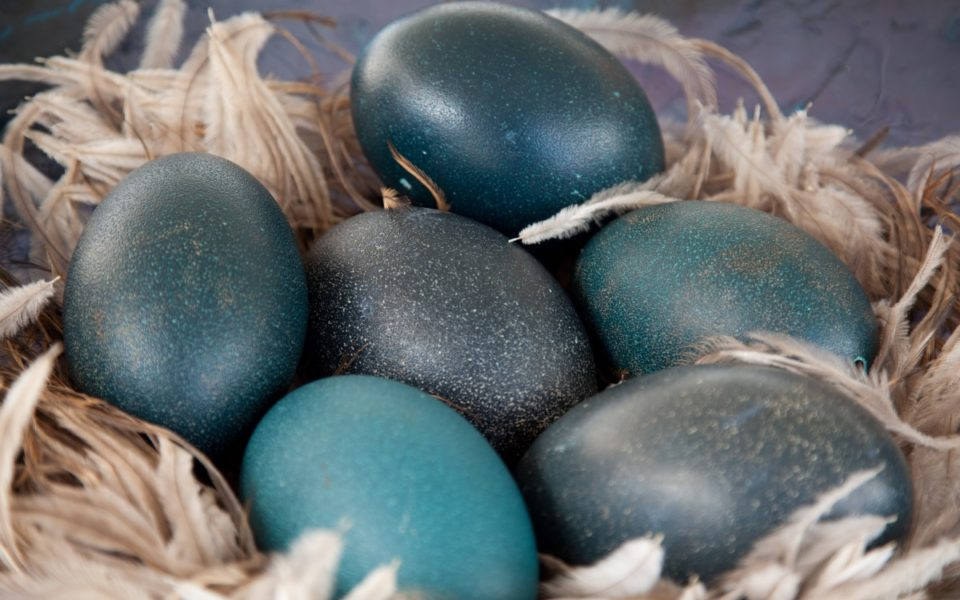 Emu Eggs On The Menu: Why Australians Are Buying More Emu Eggs photo