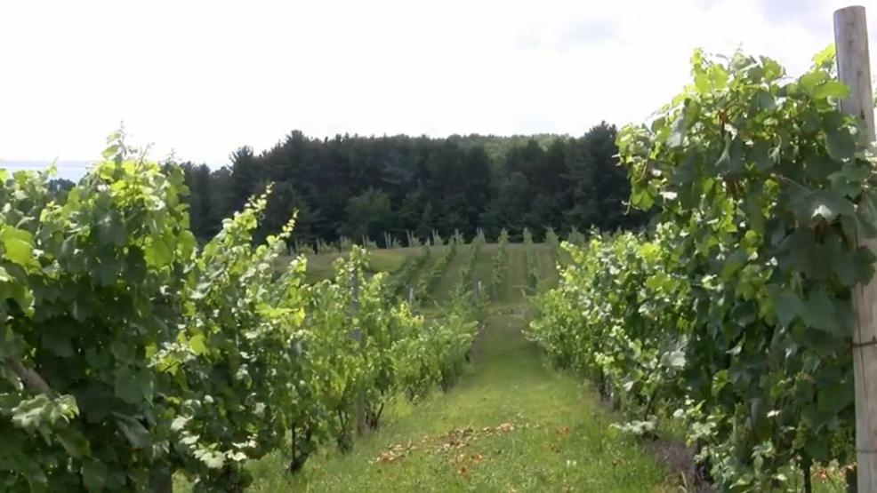 Leelanau Wine Trail Named Top Three In The Country photo