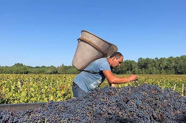 Bordeaux 2018 Red Wines: Balance Key Amid High Alcohol Levels photo