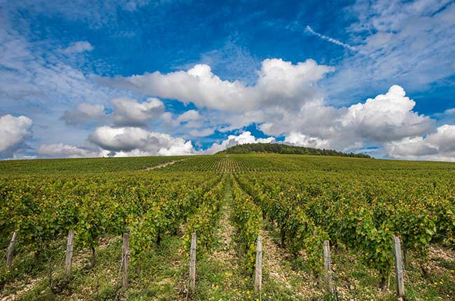 Top Chablis 2017 Wines photo