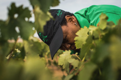 Cultivating Culture And Transformation In The South African Wine Industry photo