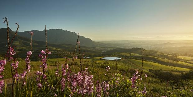Tokara Opens Its Private Gardens For The Annual Rare Plant Sale photo