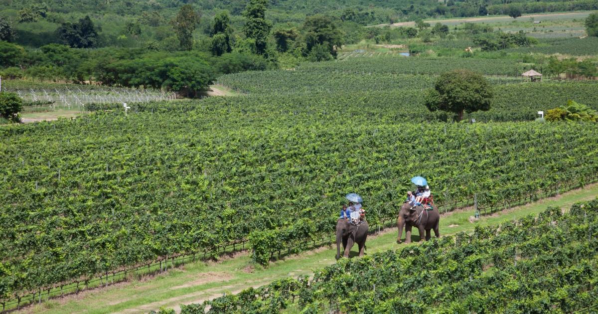 Thai, Indian Wineries photo