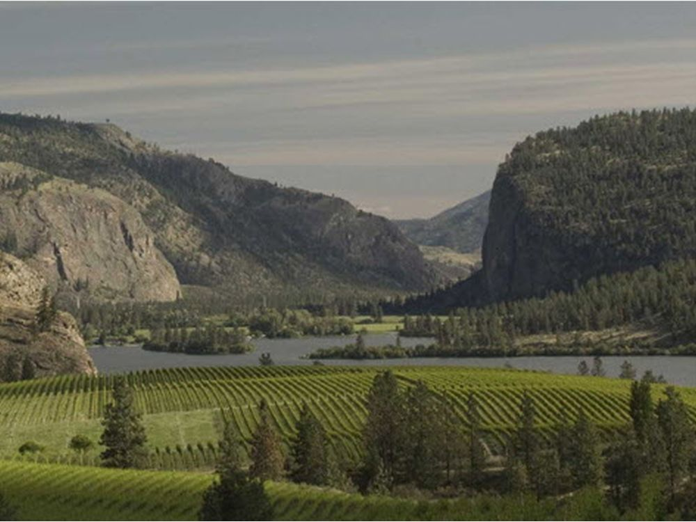 B.c. Wine Of The Week, Wine To Cellar And Calendar Items photo