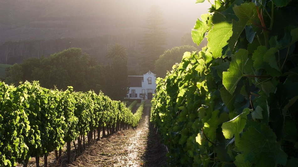 Cape Town: These Photos Will Make You Want To Move To A Wine Farm photo