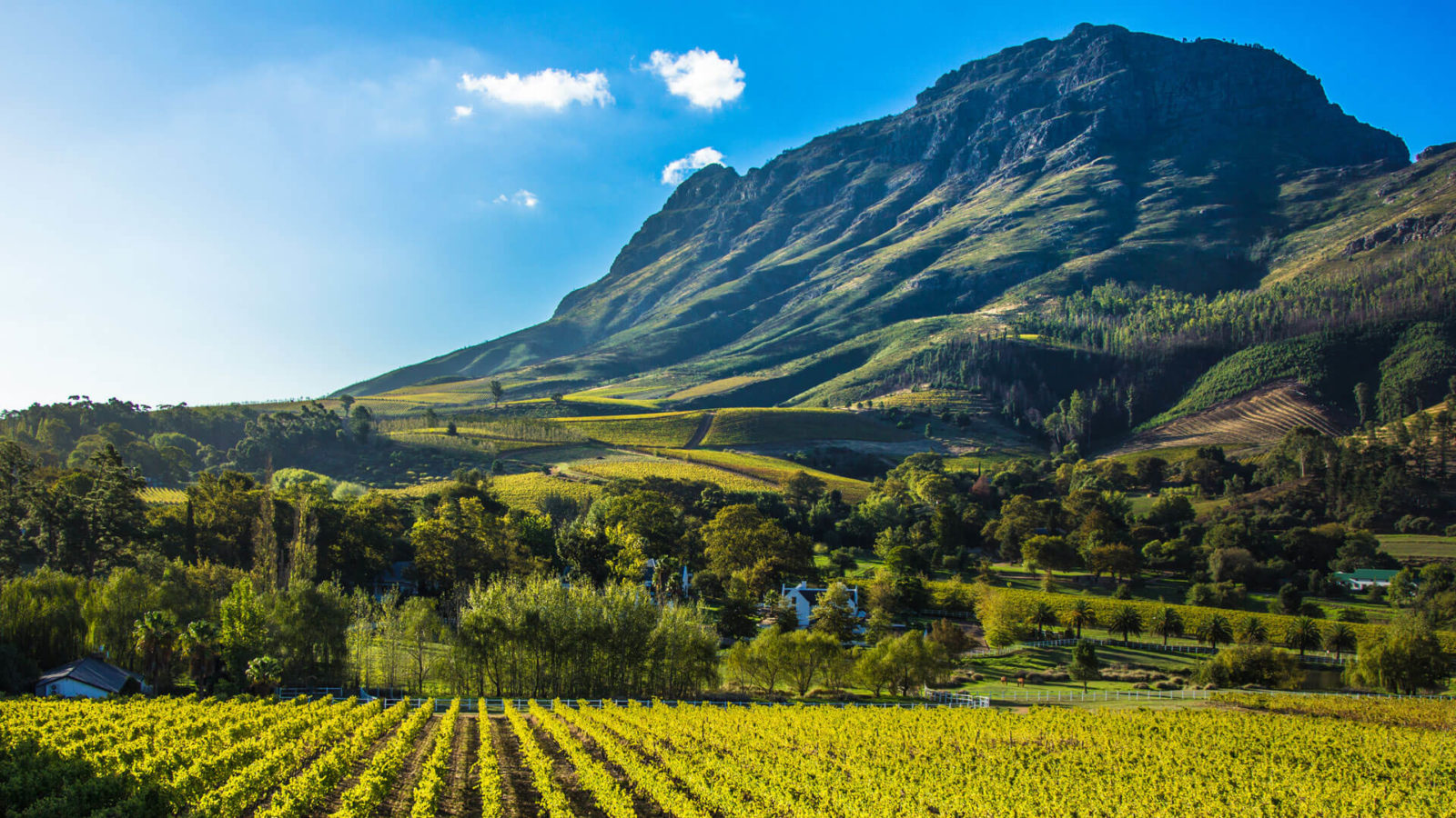 Things I Learnt About The South African Wine Industry During Lockdown photo
