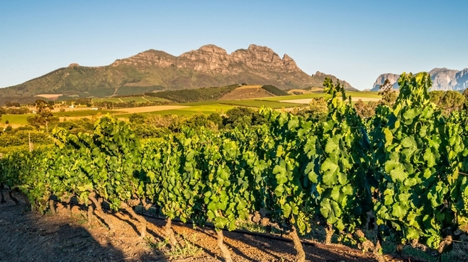 Absa Pinotage Top 10 Competition photo