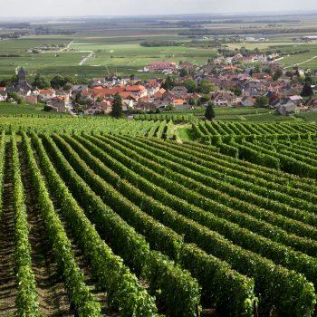 Fine Wine Investment: Investment Philosophies photo