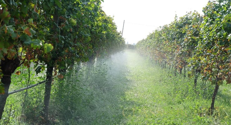 Prosecco Doc Forecasts An Exceptional Harvest For 2018 photo
