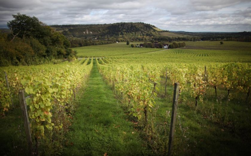 Winemakers Running Out Of Storage Space In Wake Of 'record' Harvest photo