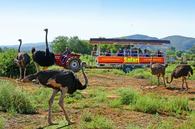 Wrap Up Your Year With Cape Country Routes' Must-do Guide photo