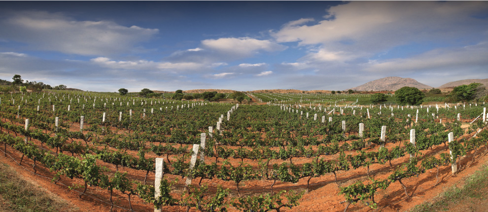 India?s Second Biggest Winery Secures Us$8m Funding photo