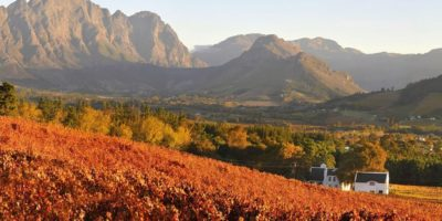 Best South African Wines At The Saq ? Montreal Times photo