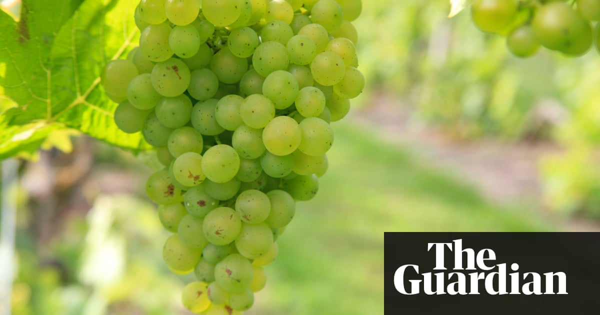 Pop A Few Corks! Why Essex's Vineyards Are The Best For Bubbly photo